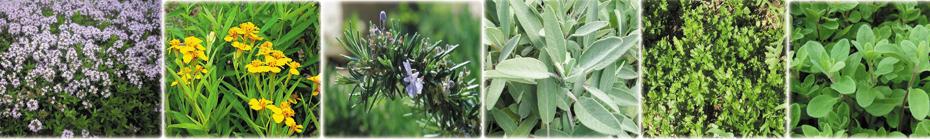 erbe aromatiche biologiche azienda agricola tra la terra e il cielo